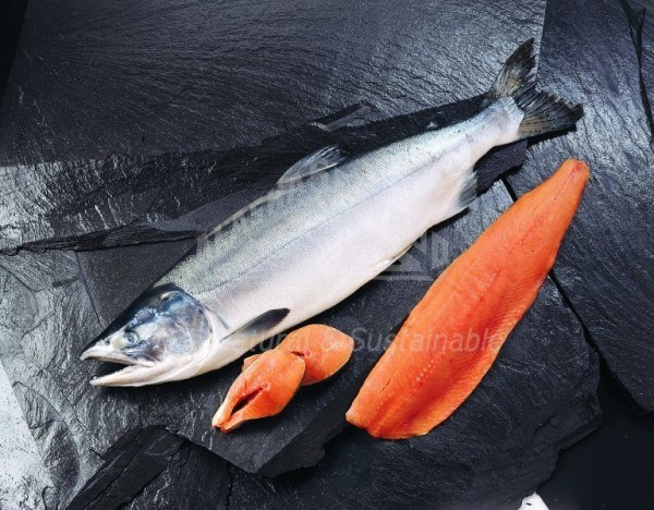 Seafood Group - Reports
